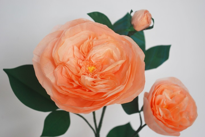 Paper Flowers: English Rose
